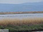 Beschermd natuurgebied voor vogels baai van Kalloni (Lesbos)
