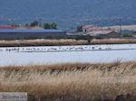 Beschermd natuurgebied voor vogels baai van Kalloni (Lesbos) foto 3