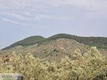 Grens olijfbomen en bossen op de weg Petra-Kalloni foto 1