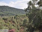 Grens olijfbomen en bossen op de weg Petra-Kalloni foto 2