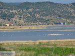 Natuurgebied voor vogels aan de baai van Kalloni foto 1