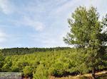 Bossen Lesbos nabij de baai van Gera bij Mytilini 1
