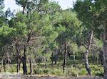 Bossen Lesbos nabij de baai van Gera bij Mytilini 2